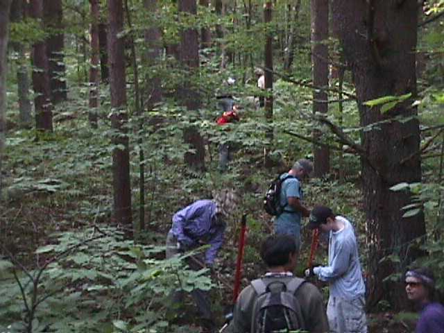 Volunteers of Fellowship of the Wheel Building a Track Through Forest